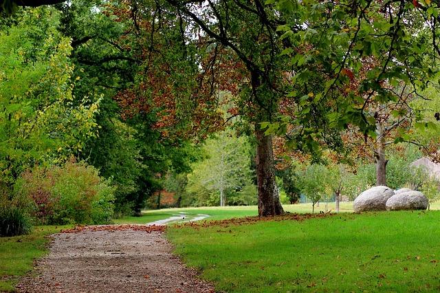 zahrada, cesta, strom, kameny