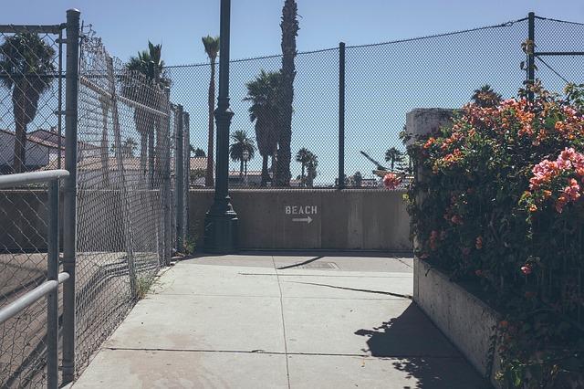 plot, cesta, květina