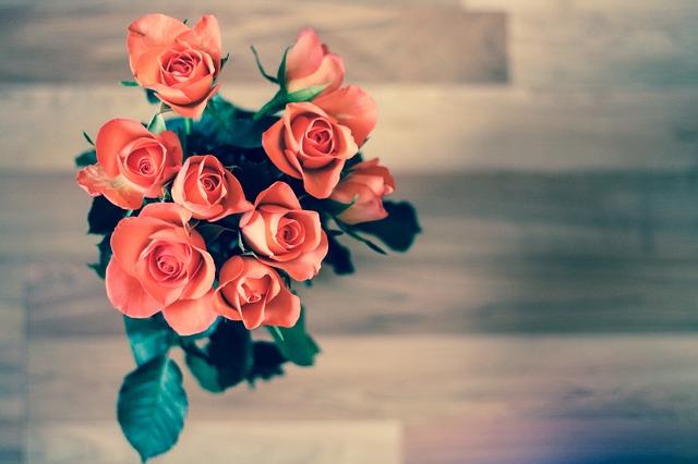 růže oranžově