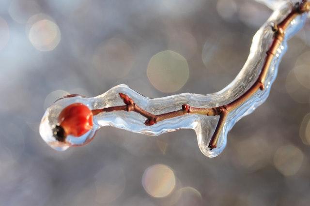 šípková větvička zamrzlá v ledu